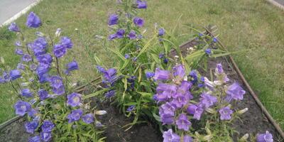 Скажите, пожалуйста, название этого цветка