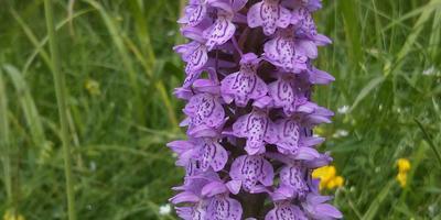 Помогите узнать, как называется этот цветок?