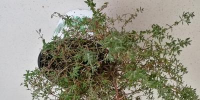 Кто знает, что это за растение?