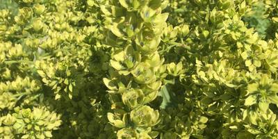 Что за растение выросло?