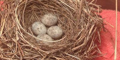 Помогите определить птицу
