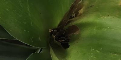 Что это за цветок и как его вылечить?