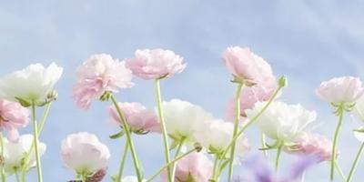 Подскажите, пожалуйста, название цветов