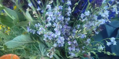 Подскажите название лугового цветка