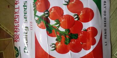 Помогите определить причины скручивания листьев томатов