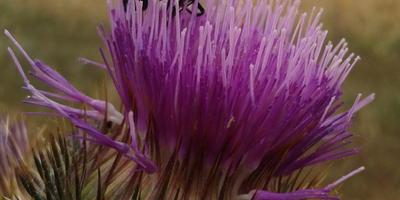Как правильно называется это растение и что за жук сидит на цветке?