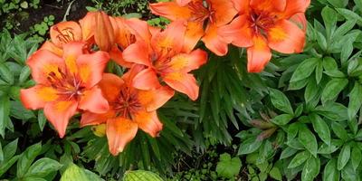 Как называется этот цветок и можно ли его срезать для букета?