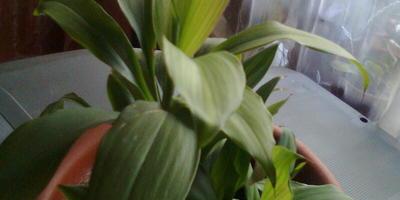 Помогите определить названия растений