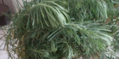 Подскажите название садового растения