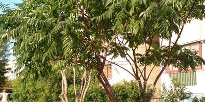 Подскажите, пожалуйста, как называется это дерево?
