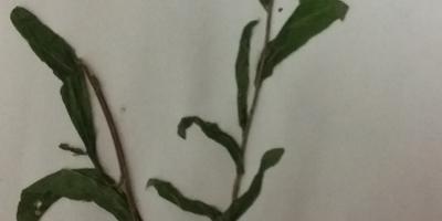Подскажите, что за растения