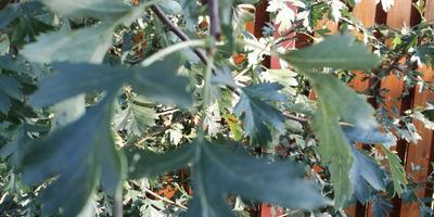 Подскажите название этого растения с колючками