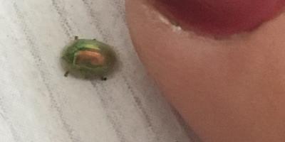 Что это за жук?