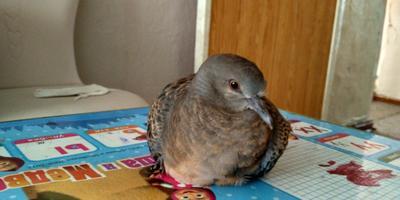 Что за птица?