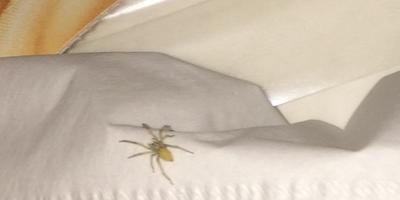 Что за паук? Он ядовитый?