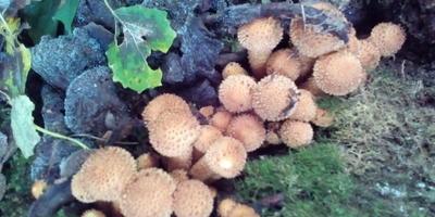 Подскажите, пожалуйста, названия грибов