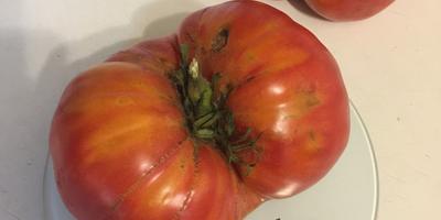 """Лучший помидор из серии """"Малиновое чудо"""""""