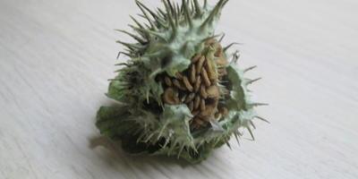 Плод какого растения показан на фото?