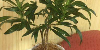 Подскажите, что за растение?