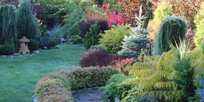 Прогулка в хвойном саду