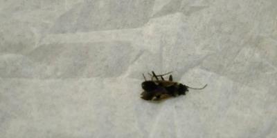 Помогите определить жука