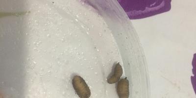 Что за личинки поселились на веранде осенью?