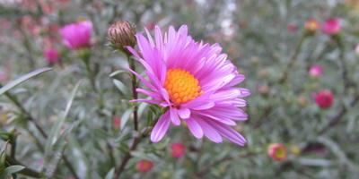 Что за цветы растут на клумбе у дома?