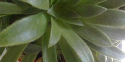 Как называется это растение?