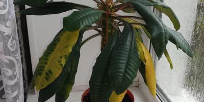 Помогите спасти растение