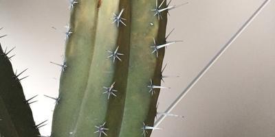 Помогите вылечить кактус
