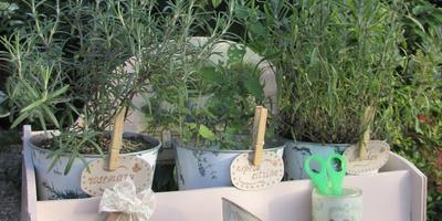 Несколько подарков саду с французским шиком