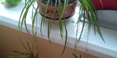 Подскажите название комнатного растения