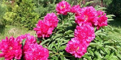 Как прекрасен этот сад, посмотри!