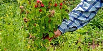 Подскажите надёжные питомники по плодовым культурам. Поделитесь отзывами о питомнике Садовод Крым