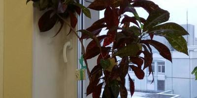 Помогите узнать название комнатного цветка