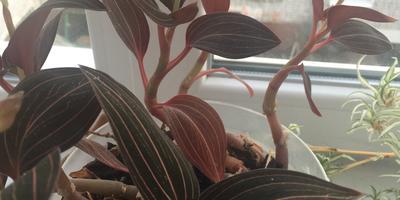 Что за растение? Как ухаживать?