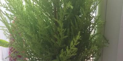 Что это за растение? Как за ним ухаживать?