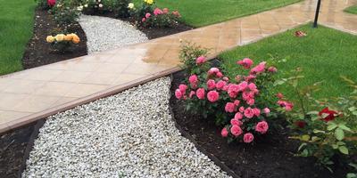 Подскажите, что за сорт розовой розы так обильно цветет?