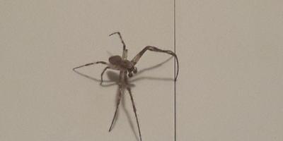 Подскажите название паука