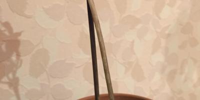 Пожалуйста, подскажите название этого растения, и почему оно пожелтело и умирает?