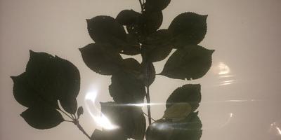 Помогите, пожалуйста, определить названия и виды растений