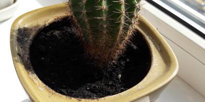 Помогите определить название кактусов