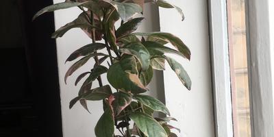 Подскажите, как называются эти растения?