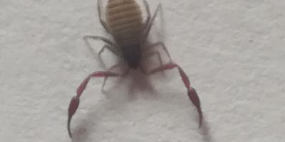 Подскажите, что за насекомое?