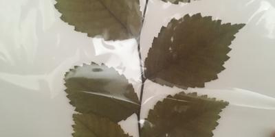 Чьи это могут быть листья?