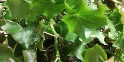 Подскажите название этого растения!