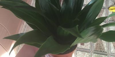 Подскажите, пожалуйста, какое это растение?