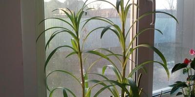 Подскажите, какое это растение?