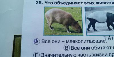 Подскажите, пожалуйста, что это за животное?