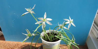 Помогите опознать этот цветок